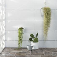 Our Vista Planters are perfect for that green wall you've been wanting to set up  Just hang with its 'S' hook, or place on a flat surface #vistaplanter #newseason #wishyouwerehere #cittalovespalmsprings