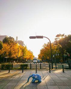 黄色 もうだいぶ散ってるけど #秋 #銀杏 #紅葉 #空 #青空 #太陽 #日本 #風景 #ダレカニミセタイケシキ #写真好きな人と繋がりたい #空好きな人と繋がりたい #autumn #sun #sunshine #bluesky #street #photo #instagram #japan #landscape #igers #igersjp #sky #ig_japan #icu_japan  #instagramers #photooftheday #picoftheday #insta #instagood