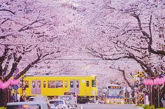 "A railway crossing famous for its cherry blossoms & traffic jam along the Nakano Dōri (street) near ""Araiyakushi-Mae Station"", Seibu Shinjuku Line at 5-43-20, Kamitakada, Nakano, Tokyo, Japan. Sad to hear that this railway is scheduled to be moved underground by 2020. Therefore the scene of a train running thru cherry blossoms in spring time cannot be seen much longer. ★さくらと渋滞の名所、東京都中野区上高田、西武新宿線・新井薬師前駅近くの中野通り踏切。悲しい事に2020年までにここ一帯の線路は地下化される予定になっている為、さくらの中を駆け抜ける電車が見られるのも後わずか。"