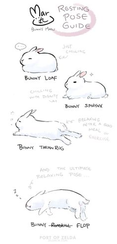 Maru's Bunny Relaxing Pose Guide by zeldacw on DeviantArt - Maru's Bunny Relaxing Pose Guide by zeldacw. Animals And Pets, Baby Animals, Cute Animals, Drawing Tips, Drawing Reference, Cute Drawings, Animal Drawings, Bunny Care, Cute Bunny