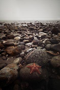 California Landscape Photography - Big Sur - Star Fish