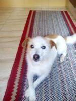 Asun - NECESITA ACOGIDA , perro en adopción