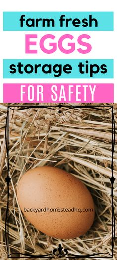 When you're collecting fresh eggs from your backyard chickens, you'll wonder how long you can safely store them. And you'll wonder if storing them in… Spring Chicken, Fresh Chicken, Chicken Eggs, Laying Chickens, Chickens Backyard, Best Laying Hens, Egg Storage, Food Storage