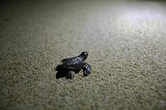 from my travels in Sri Lanka. Baby Turtles, Sri Lanka, Building, Buildings, Architectural Engineering
