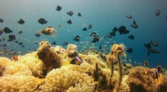 Find out 5 of the best dive sites you can experience near Papua New Guinea's national capital. Kelp Forest, Underwater Photographer, Top Five, Underwater World, Papua New Guinea, Seals, Turtles, Diving, Tourism