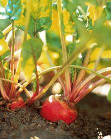 Vegetable Garden 101 - Martha Stewart Culinary gardens