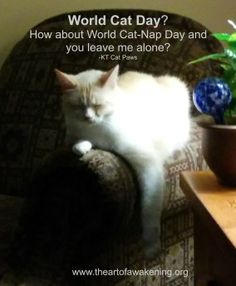 baily and world cat day