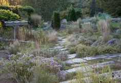 Aster oblongifolius 'October Skies', Lavender, and ornamental grasses catch the last of the evening light in The Gravel Garden.