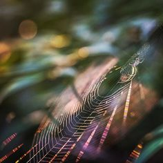 #spiderweb: a thing you walk into which suddenly turns you into a karate expert #web #nature #dofnature #spider . . . . #gottalove_a_ #ig_bliss #iheartnature #ir_ig_nature #bokeh #bokehlicious #bokeh_addicts #dof_brilliance #instanature #moodynature #moodygrams #naturelovers #naturehippys #nature_perfection #pretty_shotz #the_gallery_of_magic #tv_allnature #tv_hiddenbeauty #bns_nature