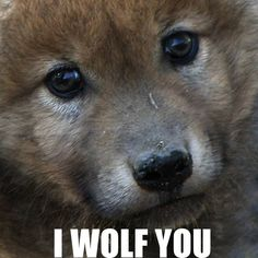 I wolf you to!