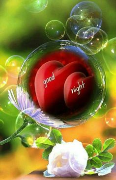 We send good night images to our friends before sleeping at night. If you are also searching for Good Night Images and Good Night Quotes. Good Night Sister, Good Night I Love You, Good Night Flowers, Beautiful Good Night Images, Romantic Good Night, Good Night Sweet Dreams, Good Morning Good Night, Good Night Qoutes, Good Night Prayer