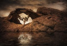 """""""Searching For a Kindred Spirit"""" by Robin Griggs Wood"""