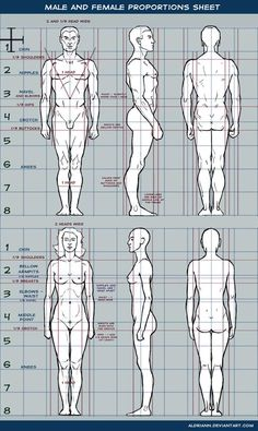 Human Figure Drawing Reference Male and female proportions sheet by Aldriann - Drawing Body Proportions, Human Body Drawing, Human Anatomy Drawing, Guy Drawing, Life Drawing, Drawing People, Figure Drawing Female, Figure Drawing Reference, Anatomy Reference
