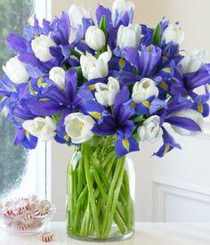 Iris and white tulips <3
