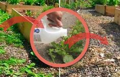 cum elimini buruienile cu otet Garden Tools, Diy And Crafts, Flowers, Plant, Yard Tools, Royal Icing Flowers, Flower, Florals, Floral
