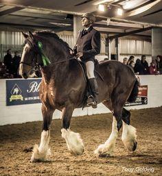 Big Horses, Horses And Dogs, Pretty Horses, Beautiful Horses, Animals Beautiful, Big Horse Breeds, Shire Horse, Horse Facts, Draft Horses