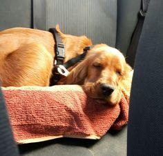 Im Auto unterwegs