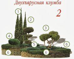 Сад Елены Виноградовой: Хвойная клумба