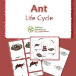 Life Cycle of an Ant...