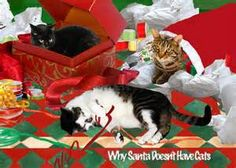 holiday cats - Bing Images