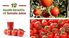 Here at V8 we love tomatoes and tomato juice. Apart from being versatile and delicious, the humble tomato is a powerhouse of nutrition. So numerous are their health benefits that they were once commonly used for medicinal purposes to treat a great number of ailments. We adore this little red fruit so much that we...