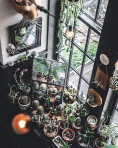 Stylist Hilton Carter's Top Tips For Arranging Plants At Home