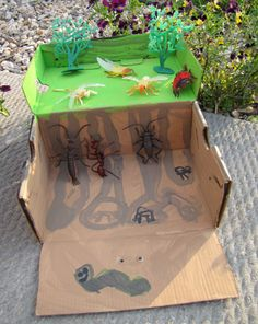 Create a bug habitat in a (shoe or other) box.