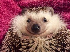 Meet Waldo, the happiest hedgehog you'll ever see
