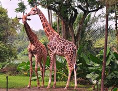 Inviting Places in Singapore – Sentosa, National Museum, Marina Bay and Singapore Zoo