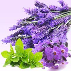Lavender Mint WOW Fragrance Oil