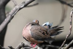 This image (View Twelve) was featured in one of my posts on blogger re questions about young mourning doves AND informative answers are appreciated @ http://www.thelastleafgardener.com/2013/06/an-open-letter-re-young-mourning-doves.html!