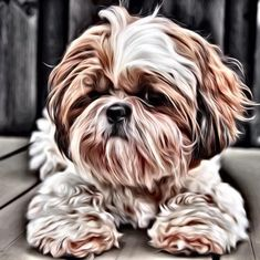 Four Shih Tzu Puppy Dogs Laying in Baby Crib Photo Wall Picture 8x10 Art Print