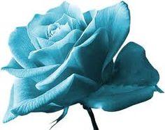 """Résultat de recherche d'images pour """"rose bleu"""""""