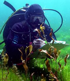 Scuba diving for scientific investigation