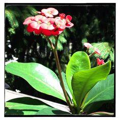 Multiple blooms