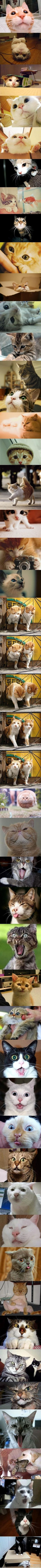 Another 22 Cutest and Lovely Cats Photos   The Recruitment Guru, #1 Recruitment Mentor for Recruiter and Companies