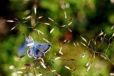 Moth, Insects, Butterfly, Photos, Animals, Animales, Animaux, Bowties, Animal Memes
