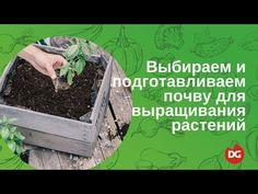 №37 Почвенное выращивание: как выбрать и подготовить почву для домашнего растениеводства? - YouTube