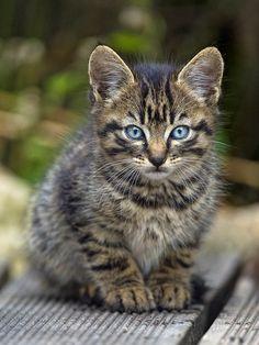 Adorable kitten II | Flickr - Photo Sharing!