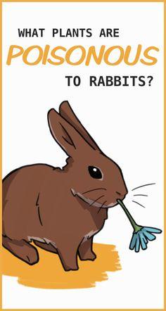 320 Bunny Bunny Ideas In 2021 Bunny Cute Bunny Cute Animals