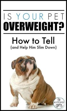 Got a pudgy pet? Cat and dog trainer Mikkel Becker understands! And she's got awesome tips to help you get your pet's weight back on track.