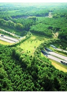 A wildlife bridge to help animals cross the highway…