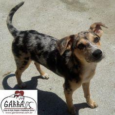 G.A.R.R.A. - Grupo de Ação, Resgate e Reabilitação Animal: Mariazinha está quase pronta para adoção! Ajude-no...