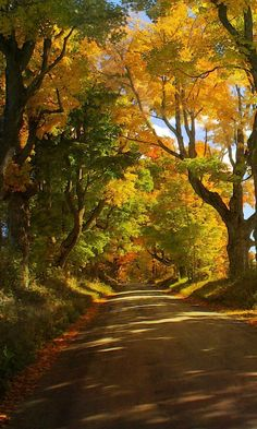 Beautiful world · let's walk this road scenery pictures, nature pictures, forest path, Autumn Scenery, Autumn Trees, Wallpaper Inspiration, Photographie Portrait Inspiration, Landscape Photography Tips, Fall Nature Photography, Creative Photography, Nature Wallpaper, Iphone Wallpaper