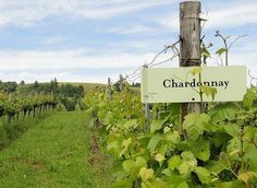 Guide To Willamette Valley Wine Country