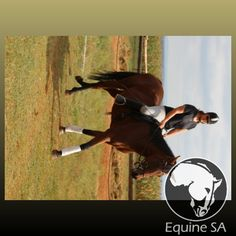 Youtoo - Registered Thoroughbred - Horses for Sale Detail Thoroughbred Horse, Horses For Sale