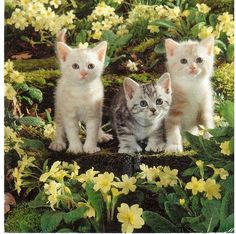 Cute kittens in a garden. Sent by a Postcrosser in Finland to thank me for sending him a card he liked. Kittens And Puppies, Cute Cats And Kittens, I Love Cats, Crazy Cats, Kittens Cutest, Cute Puppies, Cute Dogs, Photo Chat, Curious Cat