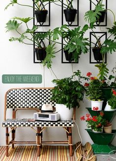 framed potted plants