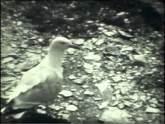 Film captured in the early 1930s by Cecil Baldwin, passed on to CAVA by his great niece. Cecil lived in London and took regular holidays to Cornwall and Devon with friends.   Full details can be found at www.cornishstory.com