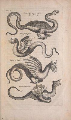 c. 4, pt. 1-3 [1657] - Historiae naturalis de quadrupedibus libri : - Biodiversity Heritage Library